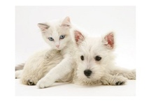 Sweet Westies & Cuddly Cats / by Betty Post