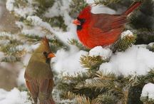 pretty birds / by Beth Hill