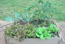 garden planning /ideas / by Meaghan L