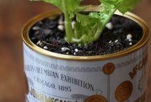 Its good to garden green... / by Nikki Misner