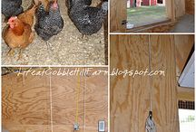 Chicken Coops / by Meredith Holman
