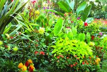 Tropical Iowa Garden - Zone 5 / I've always thought the idea of a Florida style landscape would be a fun idea here in Iowa. :-) / by Brandy Underberg