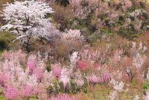 500px Spring / by Hiroaki N