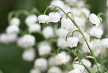 Beauty in a bud / Flowers / by Tessa Rintala