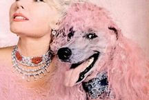 Poodle Parlor / pink, puffy, pastel, poodle pinspired! / by Charity Daw