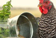 Chicken coop / by Ivana Bosch
