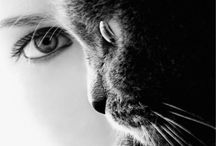 Cats / Cats are all that is sublime and enigmatic. / by Linda Chumbley