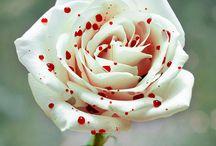 flowers / by Beth Kerr