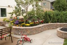 backyard / by Sasha Wayas
