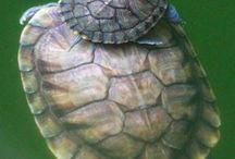 turtle fun  ;>) / by Debi Hellwege-Buchholz