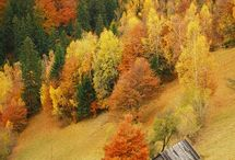 Autumn in the Mountains / by Constellation at Northstar