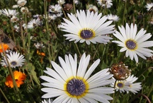Plants and flowers / by Garden Organic
