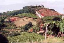 Italian Wine / by Angelini Wine