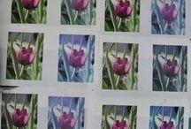 Fabric Printing / by Judy M