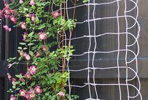 Gardening / by Cindy R