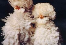 here a chick, there a chick / by Lisa Massey