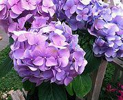 Purple Flowers / Give your house or event the royal treatment with an array of purple flowers.  / by AboutFlowers