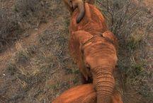 animals / by Alex Green