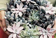 Vasos, Arranjos, Jardim  / by Tania Inoue
