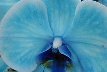 Flowers / by Cheryl Wisenbaker