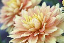 Flowers :) / by Deidre Ferry
