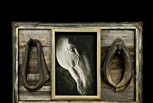 Equine Photography / by Tara Arrowood Pynn