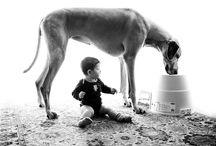 Gentle Giant / by Courtney Steinmann