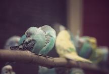 Birds / by Cheryl Ponce
