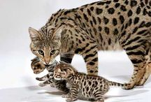 Future pets&cute animals! / Cute animals and pets that I would like to have! :) / by Kelly Prochaska
