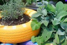 My secret Garden / by Tanisha Afzal