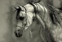 Horses / by Michelle Triplett