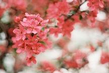 Photography // Flowers / by Sarah Loui