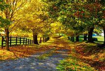 Autumn / by Ann Bucy