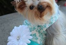 My yorkie baby / by Lisa Neal