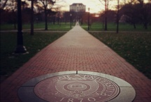 College: Ohio State / by Shelby Daugherty