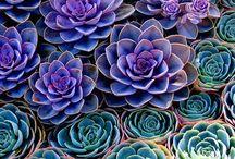 Gardening / by San Juan Parent