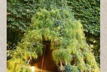 garden / by Lynda Carpenter