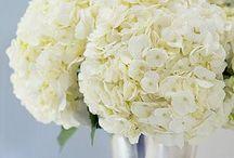 Wedding Flowers / by Beth