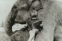 Elephants / by Kestrel Dunn