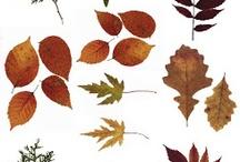 Leaves / by Jana Schoenborn Kirkwood
