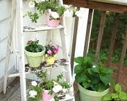 Outdoor Rooms, Potting Sheds / by Stephanie Fleming
