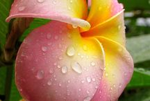 Flowers  / by Leslie Wagoner