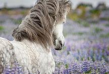 Animals / by Coral Egelund