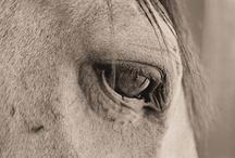 Horses / by CJInteriors