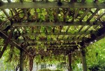 Backyard Beautification / by Michele Licciardello Benfanti