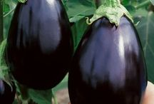 Eggplant / collect them, love to look at them, eat them, the color is just the best! Eggplant, aubergine, nasu, / by Khakie Jones