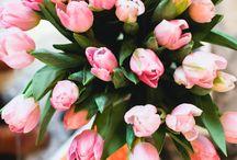 Florals / by Katie