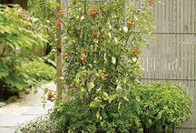 Garden / by Greg-Alicia Haynes
