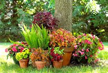 garden / by Anna Dueck