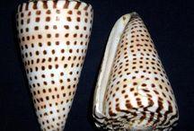 Shells / by Jacine Kylo